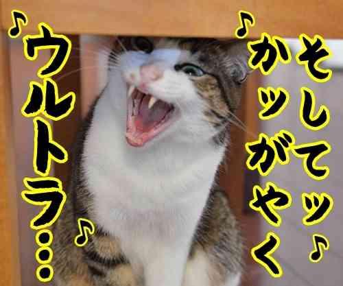 猫に癒してもらうトピ