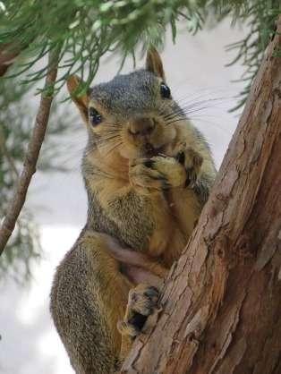 動物が食べている画像(^o^)
