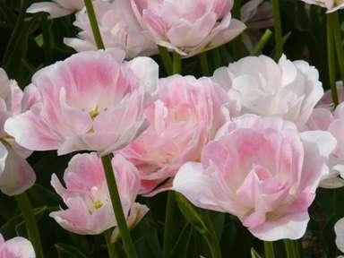 知ってる花の画像と花の名前