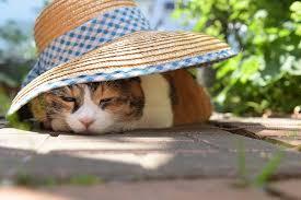 どこか切ない夏の画像を貼っていくトピpart2