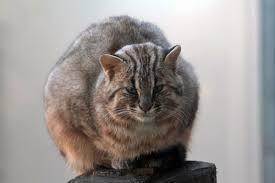 【画像】ネコ科の動物が集まるトピ