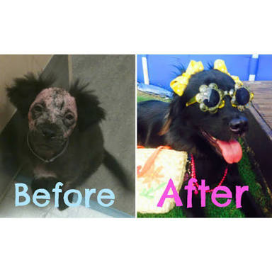 Before&Afterがわかる画像