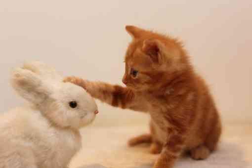 【画像】子猫が集まってくるトピ