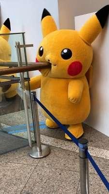 今年は世界初「イーブイの大行進」も! 「ピカチュウ大発生チュウ!」8月10日から横浜で開催