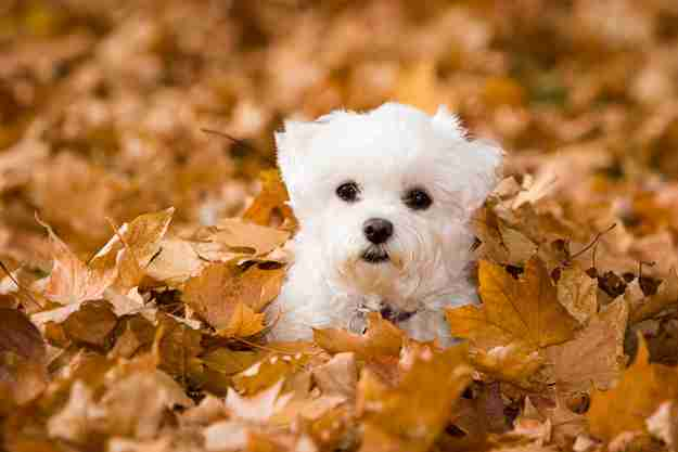 秋冬愛好会