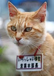 ガルちゃん猫カフェ30号店 開店しました♪ (初めての方も大歓迎!)