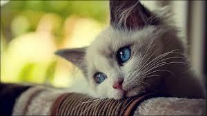 飼い猫を溺愛しすぎてやってしまったこと
