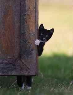 黒ネコの写真を貼るトピ