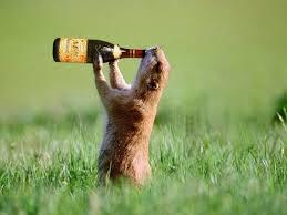 休日に昼間からお酒を飲んでいる人