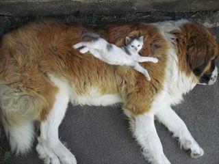 犬と猫が一緒に写ってる画像を貼るトピ