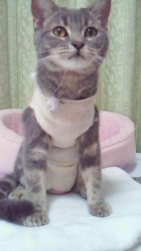 ネコの避妊手術について