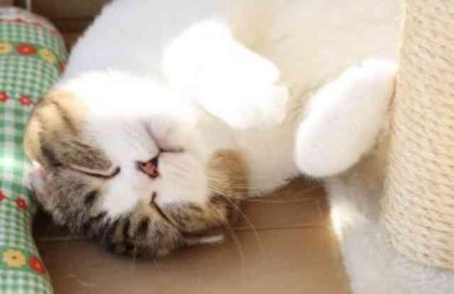 あー猫に触りたいと思う時。