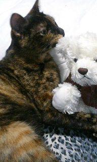 サビ猫の写真を貼るトピ