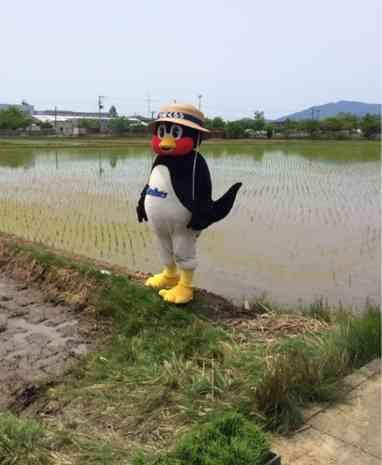 【画像】いろんなつば九郎が見たい♪
