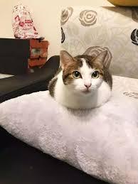 猫の可愛いしぐさ☆