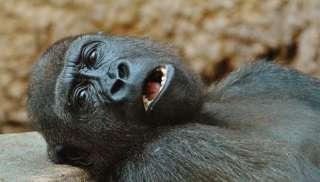 態度が悪い動物の画像を貼るトピ