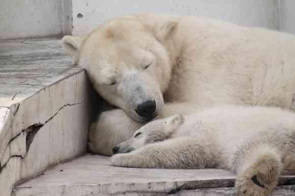 【画像】お昼寝している動物達【..zzZZ】
