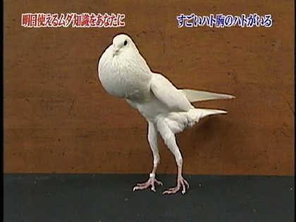 鳩胸でも似合うファッション