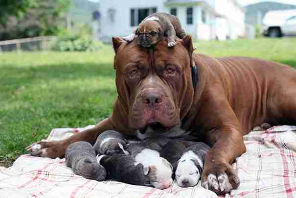 ブサカワ犬が好きな人
