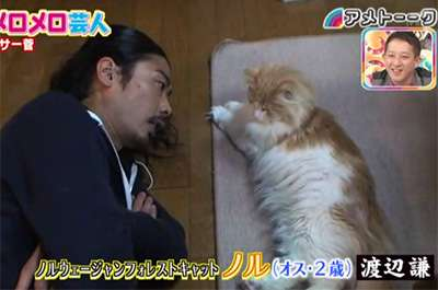 芸能人や有名人の猫、有名猫を愛でるトピ