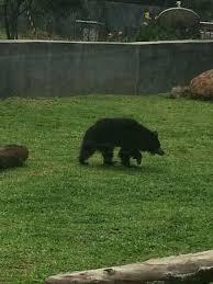 黒い動物が集合するトピ