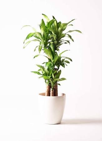 自宅に花や観葉植物ありますか?
