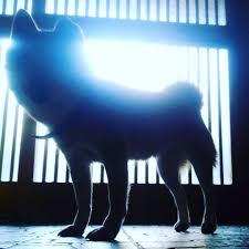 「めっちゃパワー感じる」「拝みたい」 宮城県で撮影された写真が話題に!