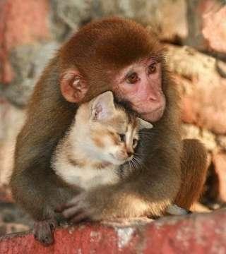 動物の仲良し画像