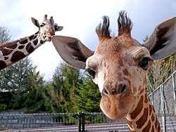 動物園、水族館が嫌いな人