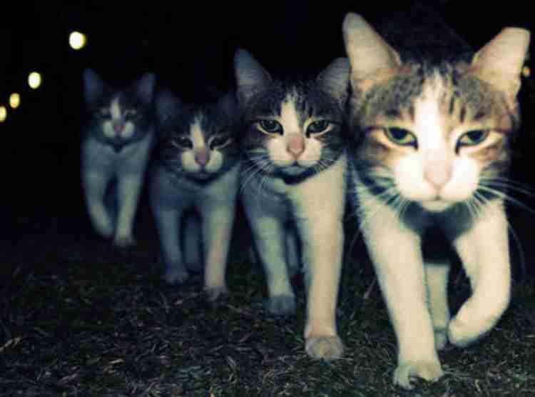 """夜中に元気なネコと、眠りたい飼い主…暗視映像に映るネコたちの行動が""""あるある""""すぎる"""