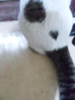 (身バレしない程度に)お宅の猫ちゃん見せてください!part2