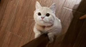 猫のすきなパーツ