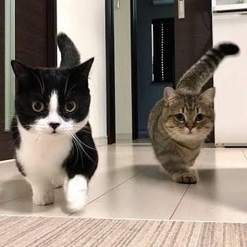 ガルちゃん猫カフェ32号店 開店しました♪ (初めての方も大歓迎!)