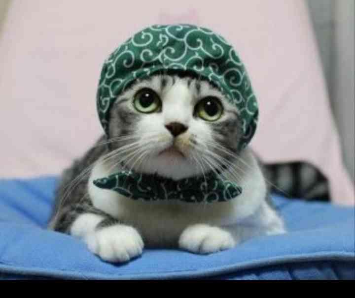 スカーフを使ったコーデ