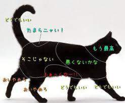 あなたの知ってる「猫用語」