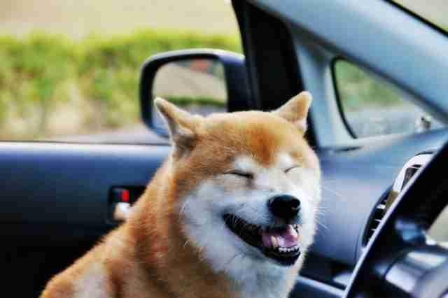 ドライブのお誘いしてる・してそうな画像を貼って乗りたかったらプラス