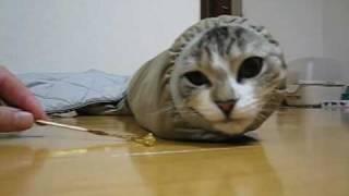 イモムシなネコ - YouTube
