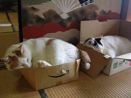 猫あるある