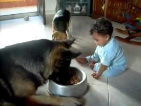 犬と赤ちゃんの仁義なき戦い 死闘編 - 動画 - Yahoo!映像トピックス