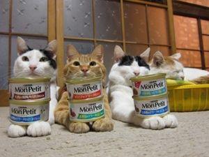 ほんわか癒される、かご猫・のせ猫たちの画像 - NAVER まとめ