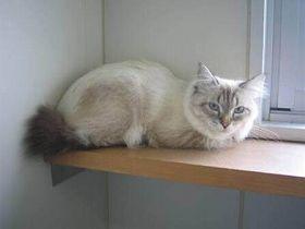 秋田県知事、ロシアからのネコにメロメロ 「もう、猫ちゃんよりは先に死なれにゃい」 : 〓 ねこメモ 〓