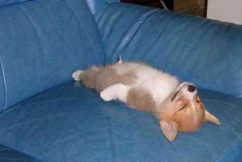 動物の寝てる姿かわいすぎ!