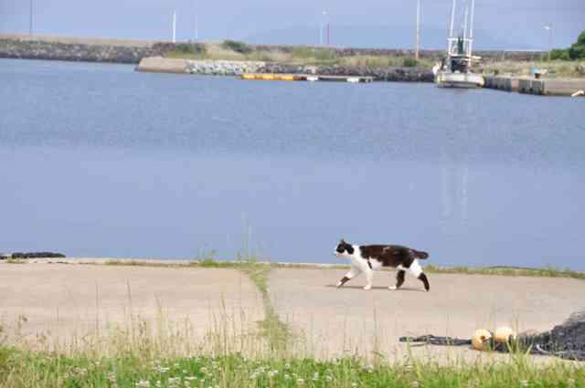 人口50人、猫50匹の猫パラダイス、長崎県五島列島・猫島