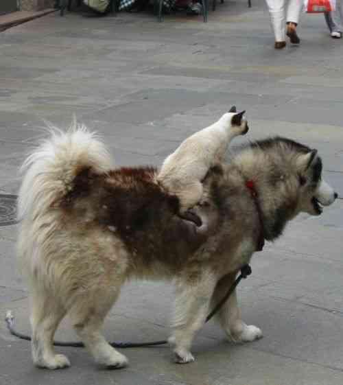 無慈悲にも動物を乗り物にする動物たちww