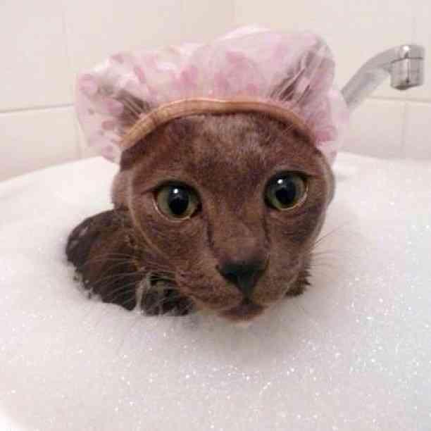 気持ちいい?嫌い?ネコの入浴シーン27枚