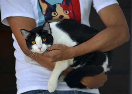 ネコが市長選に出馬!フェイスブックで支持拡大!