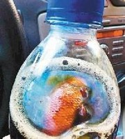 買ったばかりのコーラ、一口飲んだら中から金魚の腐乱死骸が!―陝西省西安市 (XINHUA.JP) - Yahoo!ニュース
