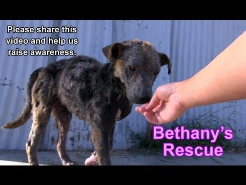 Rescuing Bethany - a sick, homeless dog's inspiring transformation (Please share) - YouTube