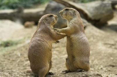 皆キスが好き!人がキスをする理由「相手との相性を高める」 - Ameba News [アメーバニュース]