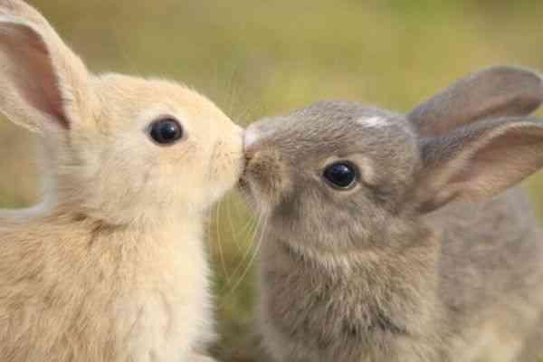 皆キスが好き!人がキスをする理由「相手との相性を高める」